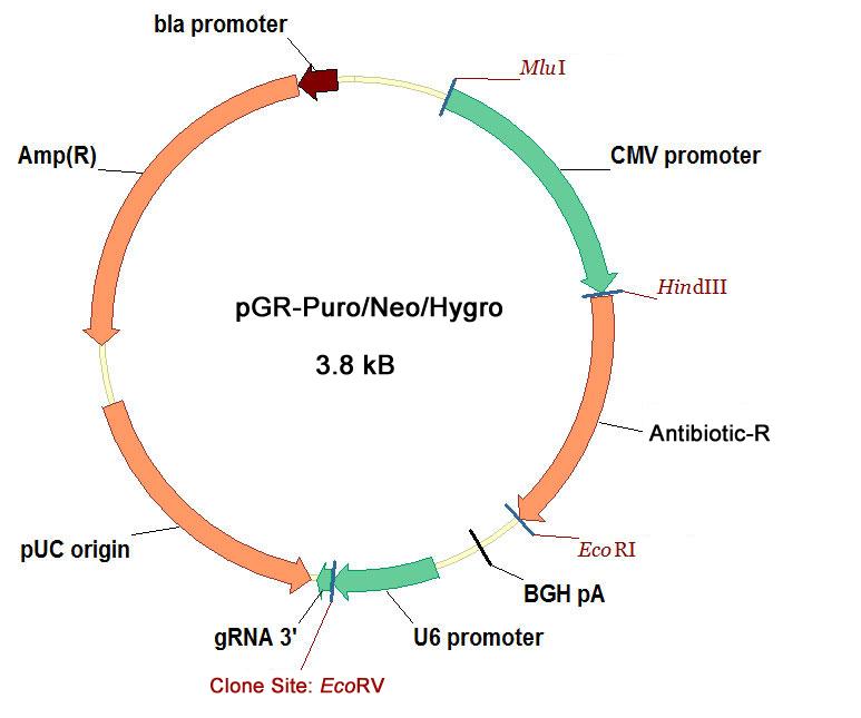 http://www.inovogen.com/geneknockout/CRISPR-Cas9/lentivirus/2014/1112/335.html