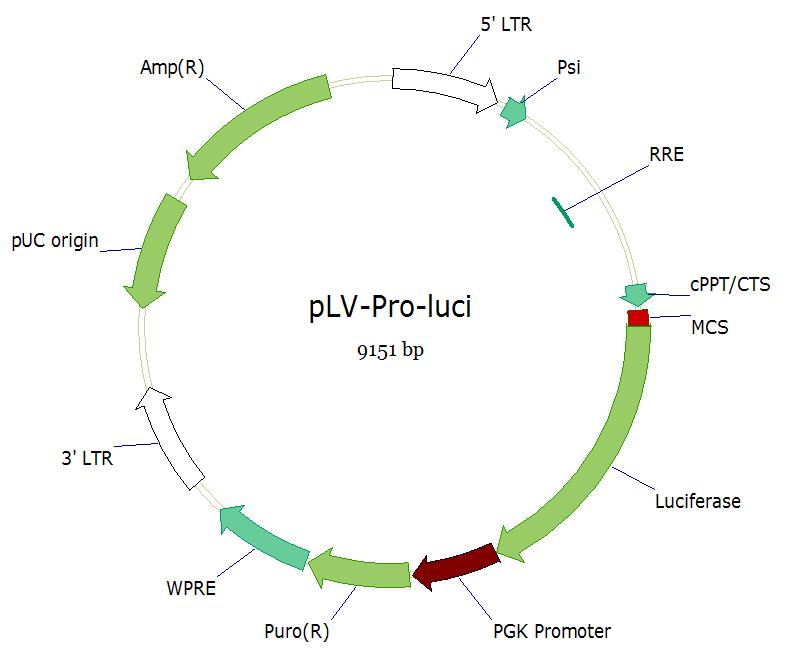 pLVshRNA-EGFP(2A)Puro双标慢病毒载体